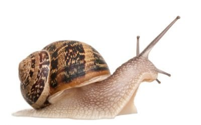 Mac Slow? Get Its Speed Back